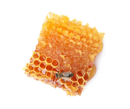 Honeycomb and bee on white background, top view. Domesticated insect