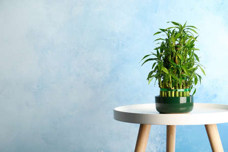 Table with potted bamboo plant near color wall. Space for text Foto de archivo