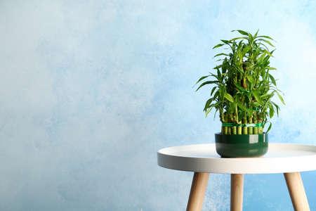 Tafel met ingemaakte bamboe plant in de buurt van kleur muur. Ruimte voor tekst Stockfoto