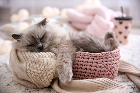 Cute cat in basket at home. Warm and cozy winter Standard-Bild
