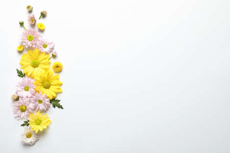 Beautiful chamomile flowers on white background, flat lay with space for text