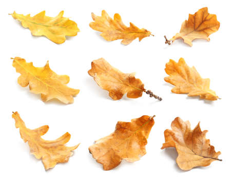 Set with autumn leaves on white background. Fall foliage Imagens