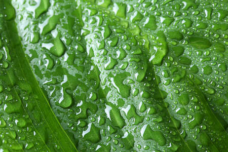 Macro view of water drops on green leaf Stock Photo