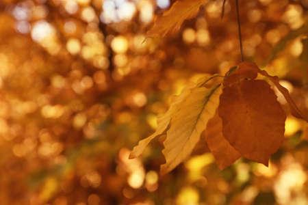 Ramita de árbol con hojas brillantes en un día soleado de otoño