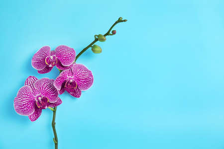 Branch with beautiful tropical orchid flowers on color background, top view. Space for text Imagens