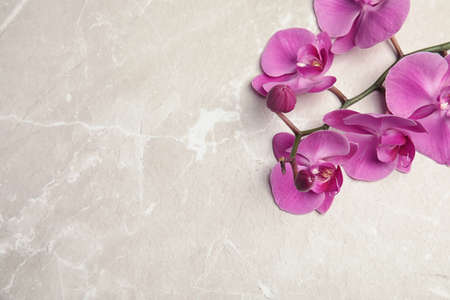 Branch with beautiful tropical orchid flowers on light background, top view. Space for text Stock fotó