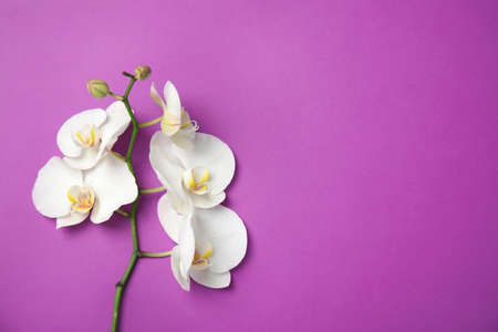 Branch with beautiful tropical orchid flowers on color background, top view. Space for text 免版税图像