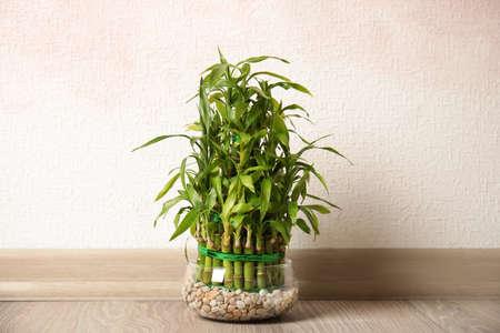 Bambú verde en un tazón de vidrio cerca de la pared de color