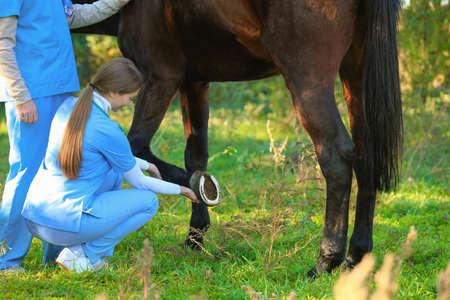 Veterinarians in uniform examining beautiful brown horse outdoors Imagens