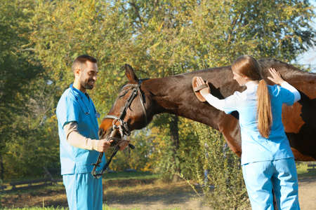 Veterinarians in uniform brushing beautiful brown horse outdoors Stockfoto