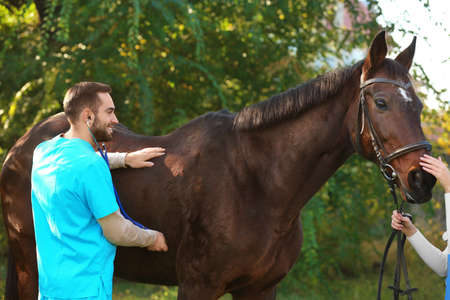 Veterinarian in uniform examining beautiful brown horse outdoors
