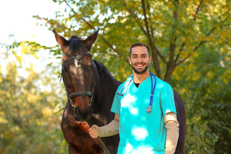 Veterinarian in uniform with beautiful brown horse outdoors Imagens