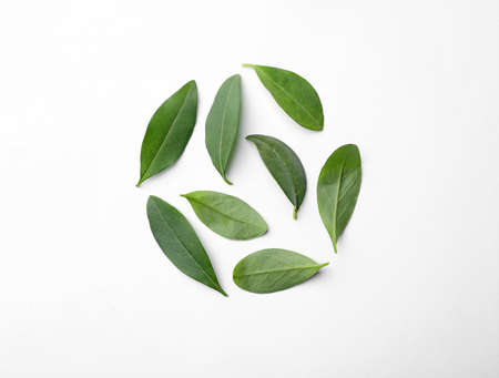 Fresh green citrus leaves on white background, top view Stockfoto