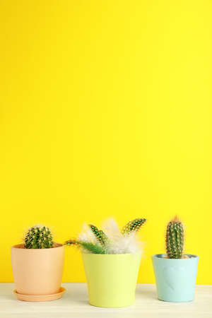 Pots with cacti and one with feathers on table against color background Stock Photo