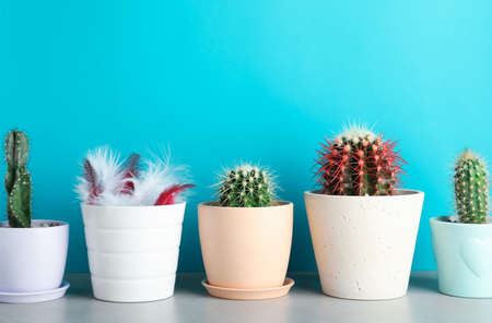 Pots with cacti and one with feathers on table against color background 写真素材
