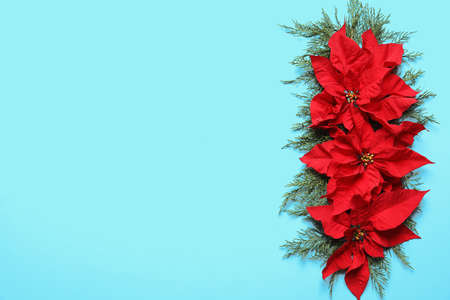 Flat lay composition with poinsettia and space for text on color background. Traditional Christmas flower Stock Photo