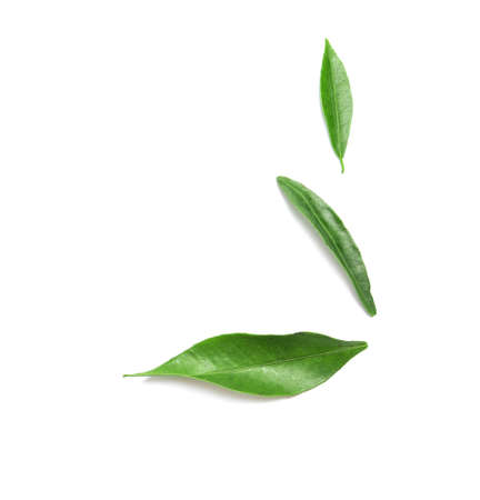 Composition with fresh green tangerine leaves and space for text on white background, top view Stockfoto