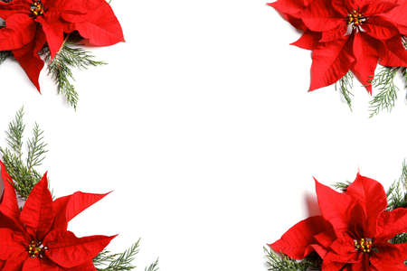 Flat lay composition with poinsettia and space for text on white background. Traditional Christmas flower