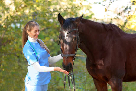 Veterinarian in uniform with beautiful brown horse outdoors Фото со стока