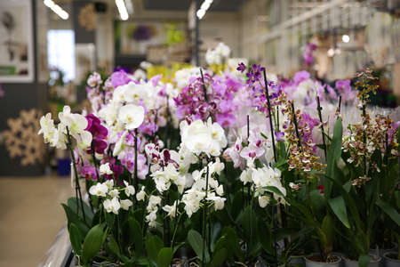 Assortment of beautiful orchid flowers at floral shop Stock Photo