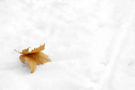Dry leaf on snow, space for text. Winter weather Stock Photo