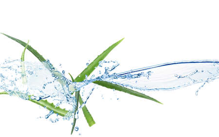 Spiked leaves of aloe with water splashes on white background