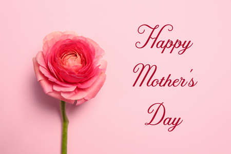 Beautiful ranunculus flower and text Happy Mothers Day on pink background, top view