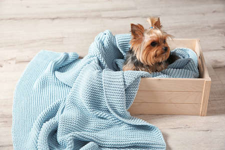 Yorkshire terrier in wooden crate on floor, space for text. Happy dog Standard-Bild