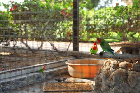 Différents oiseaux exotiques dans une volière extérieure, vue à travers la grille avec un espace pour le texte