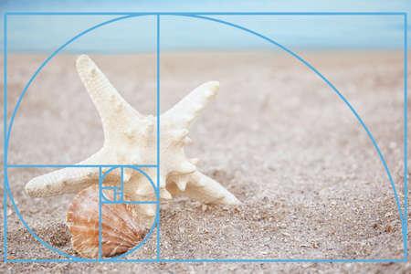 Fibonacci spiral starfish with seashell on sandy beach. Golden ratio concept