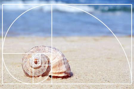 Fibonacci spiral and seashell on sandy beach. Golden ratio concept
