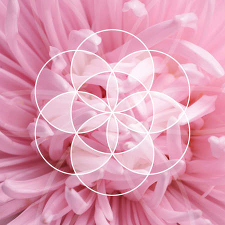 Fibonacci spiral arrangement and beautiful flower as background