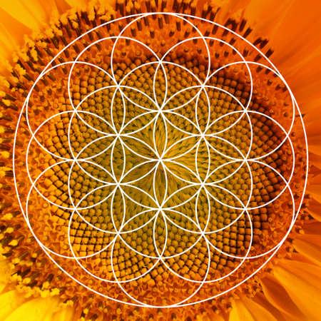 Fibonacci spiral arrangement and beautiful flower as background Stock Photo