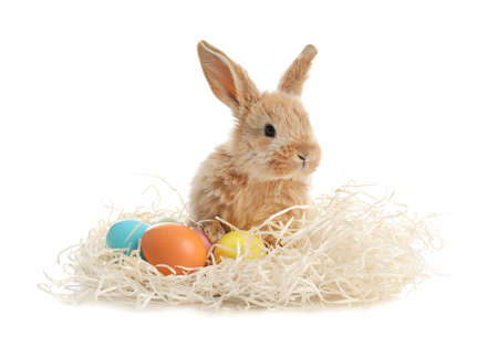 Adorable furry Easter bunny with decorative straw and dyed eggs on white background