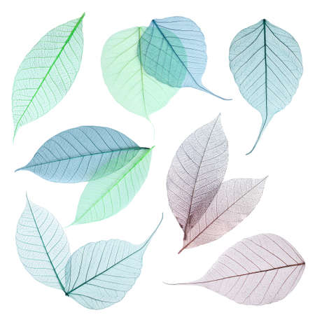 Set of decorative skeleton leaves on white background, top view
