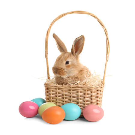 Adorable furry Easter bunny in wicker basket and dyed eggs on white background