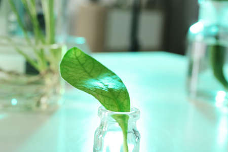 Green leaf in glassware on blurred background, closeup. Plant chemistry Imagens