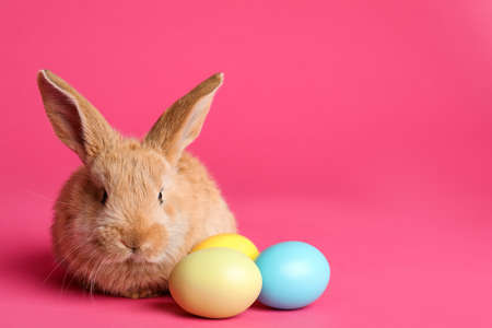 Adorable furry Easter bunny and dyed eggs on color background, space for text Stock Photo