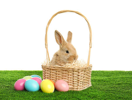 Adorable furry Easter bunny in wicker basket and dyed eggs on green grass against white background