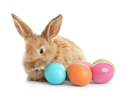 Adorable furry Easter bunny and colorful eggs on white background Stock Photo