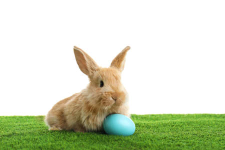 Adorable furry Easter bunny and dyed egg on green grass against white background, space for text Stock Photo