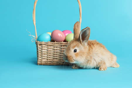 Adorable furry Easter bunny near wicker basket with dyed eggs on color background