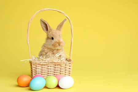 Adorable furry Easter bunny in wicker basket and dyed eggs on color background, space for text Stock Photo