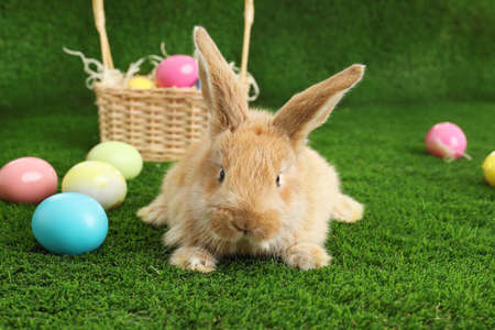 Adorable furry Easter bunny near wicker basket and dyed eggs on green grass Stock Photo