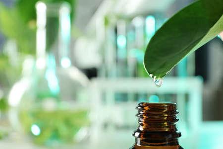 Klarer Tropfen, der vom Blatt in eine kleine Flasche auf unscharfem Hintergrund fällt, Nahaufnahme mit Platz für Text. Pflanzenchemie