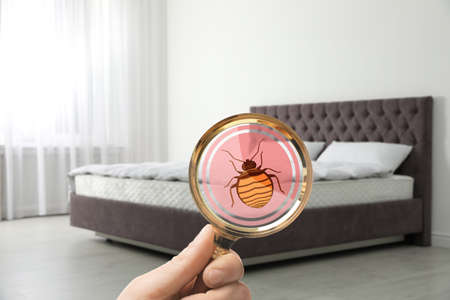 Woman with magnifying glass detecting bed bugs on mattress, closeup 版權商用圖片