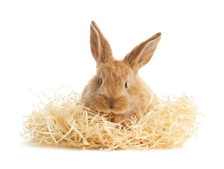 Adorable furry Easter bunny with decorative straw on white background