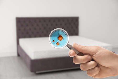 Woman with magnifying glass detecting bed bugs on mattress, closeup Standard-Bild
