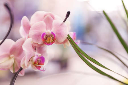 Beautiful blooming tropical orchid on blurred background, closeup