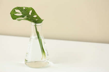 Conical flask with plant on table against color background, space for text. Chemistry laboratory research Banco de Imagens